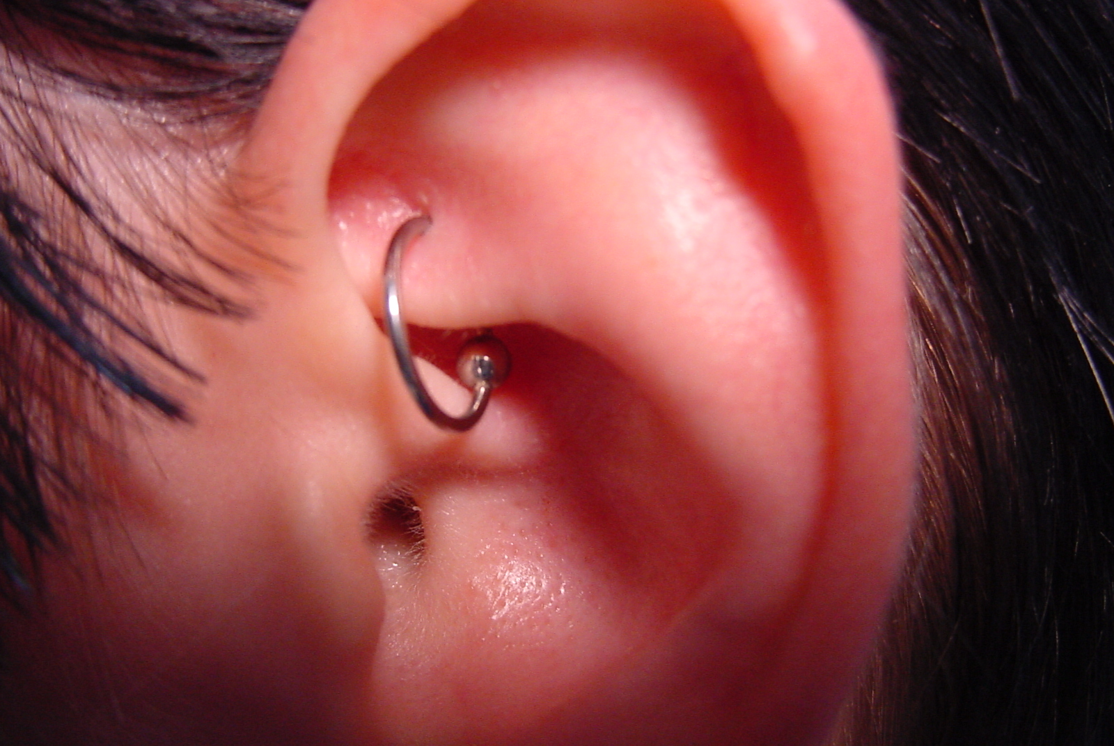 Rook Piercing Axiom Body Piercing Studio