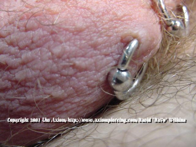 Scrotum piercing